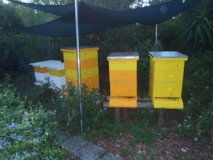 2015 July Hives