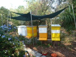 2015-4 Bee Hives